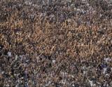 Arena Corinthians - Torcida